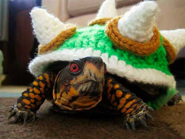Disfraz de Tortuga Browser Súper Mario